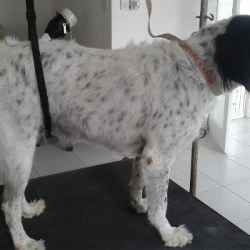 lola large hunting x before (640x450)